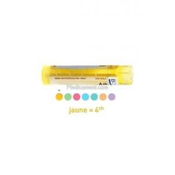 Sanicula Europaea dose, granules, Boiron 4CH, 5CH, 7CH, 9CH, 30CH