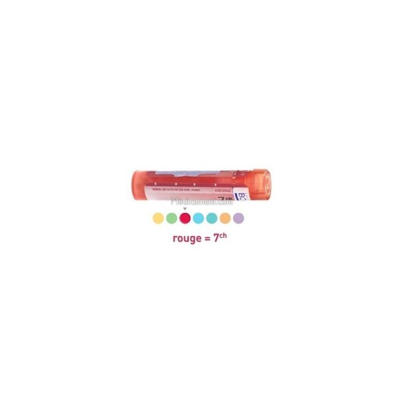 Anacardium Occidentale dose, granules, Boiron 5CH, 7CH