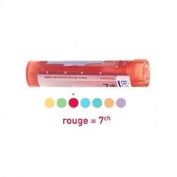 Daucus Carota dose, granules Boiron 5CH, 7CH, 9CH, 15CH