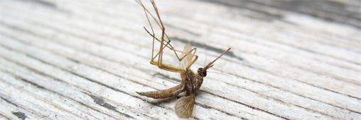 Le DEET tue les moustiques, et est toxique pour l'homme