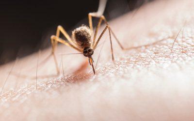 Le point sur les produits anti-moustiques